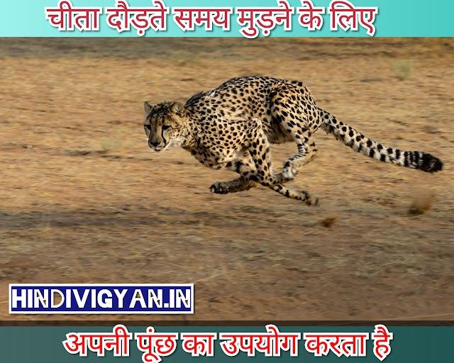 amazing facts in HINDI, रोचक तथ्य - hindivigyan