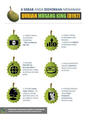 6 Sebab Disyorkan Tanam Musang King