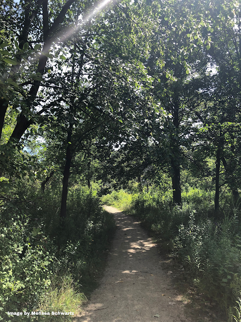 A rustic trail through the woods at Walking Stick Woods.
