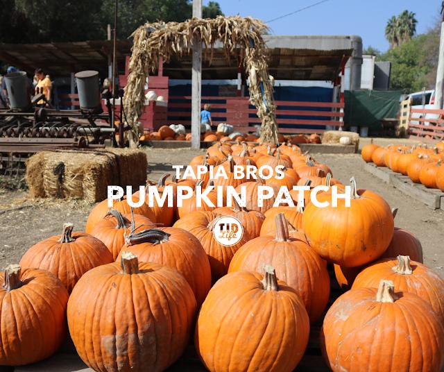 tapiabros-pumpkinpatch-t1dlife