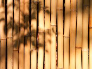 mencegah-bambu-diserang-rayap.jpg
