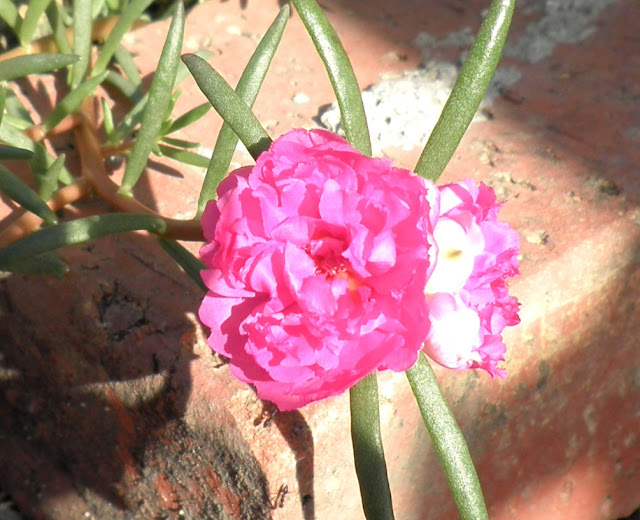 bunga pukul 10