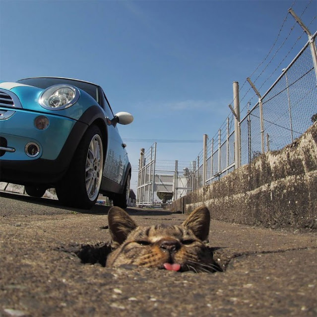 Japanese Photographer Captures Innocent Stray Cats Having Fun