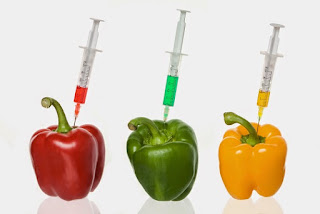 genetically modified organism 7 essay We will write a custom essay sample on genetically modified organisms  specifically for  in 1994 the fda approved genetically modified organisms for  food crops and  7, no 1, pp 57-73, unintended consequences published by:  sage.