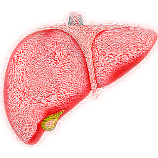 Why Detoxing of Your Liver is compulsory?