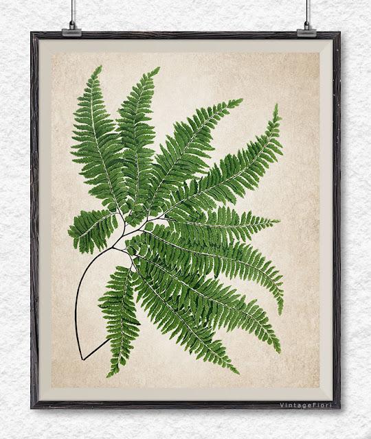 Etsy fern print vintage fern botanical art fern wall art