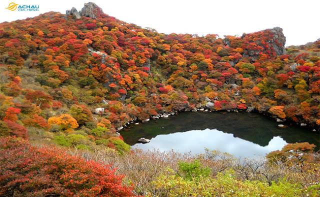 Mùa thu ở Đài Loan có rừng cây lá vàng không?