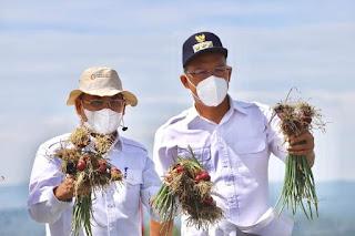 Dirjen Hortikultura Kementan Panen Bawang Merah Dilokasi Food Estate, Prihasto: Humbahas Sudah Diatas Rata-rata Nasional