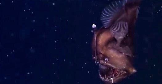 Estranha criatura no fundo do oceano