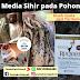 Media Sihir pada Pohon kayu (kisah nyata dari Yordania)
