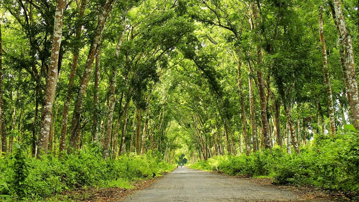 rerimbunan pohon di Alas Purwo