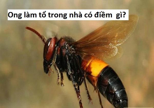 Ong vò vẽ làm tổ trong nhà tốt hay xấu, điềm báo gì, đánh con gì, số mấy?