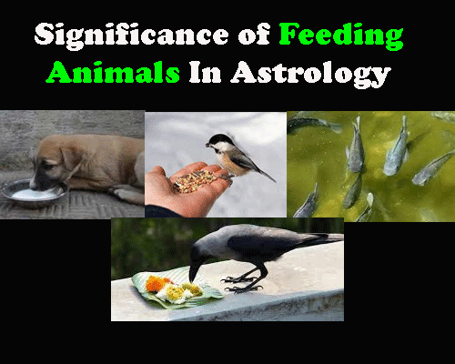 Significance of Feeding Animal In Astrology