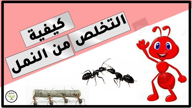 النمل في القرآن