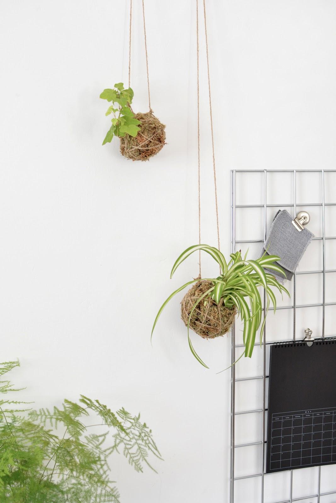 string garden project, gardening, urban garden, succulents