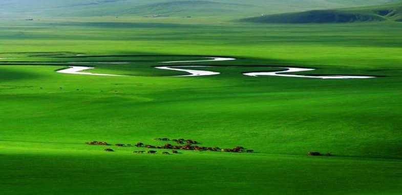 Grasslands of the World