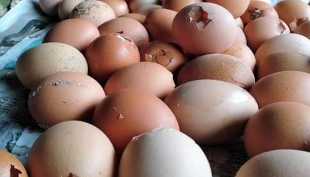 bahaya dibalik telur retak
