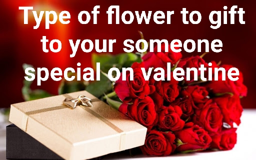 Type of flower to gift to your lady on valentine