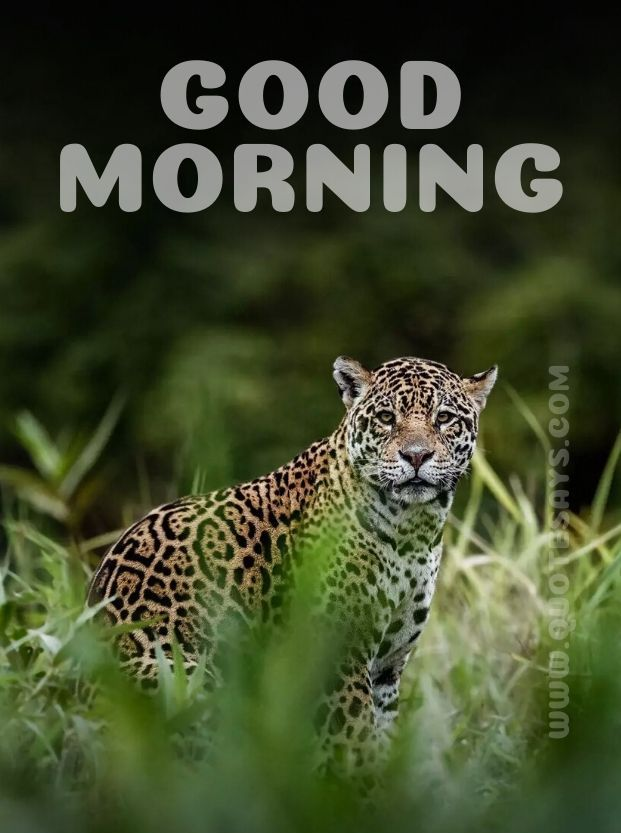 Beautiful Good Morning Leopard