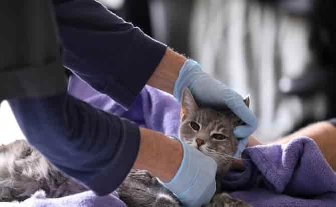 animales, mascotas, coronavirus,