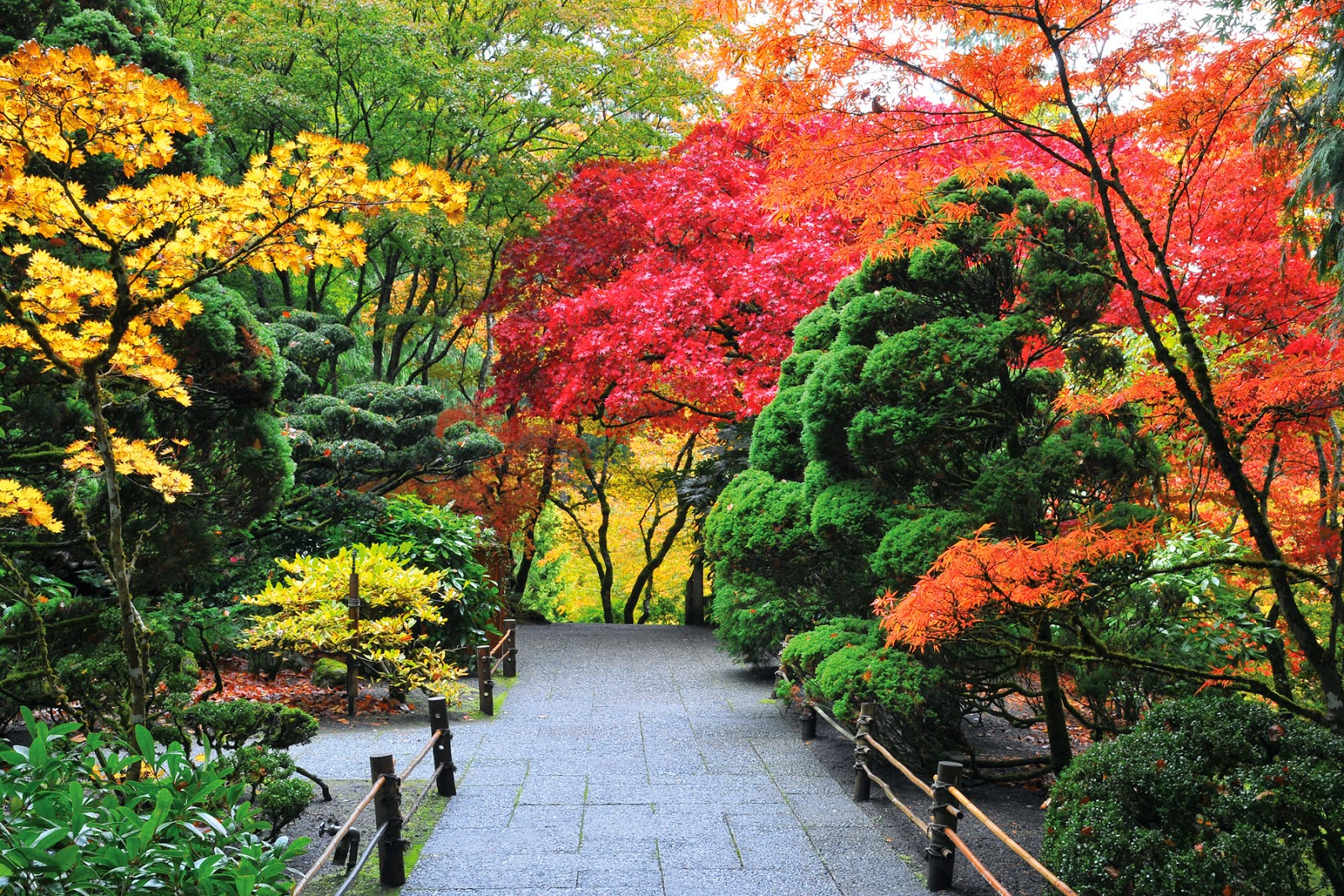 Imagenes ethel junio 2014 - Fotos de jardines ...