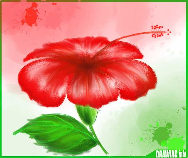 How To Draw A Hibiscus Flower Easy Step By Step With Color