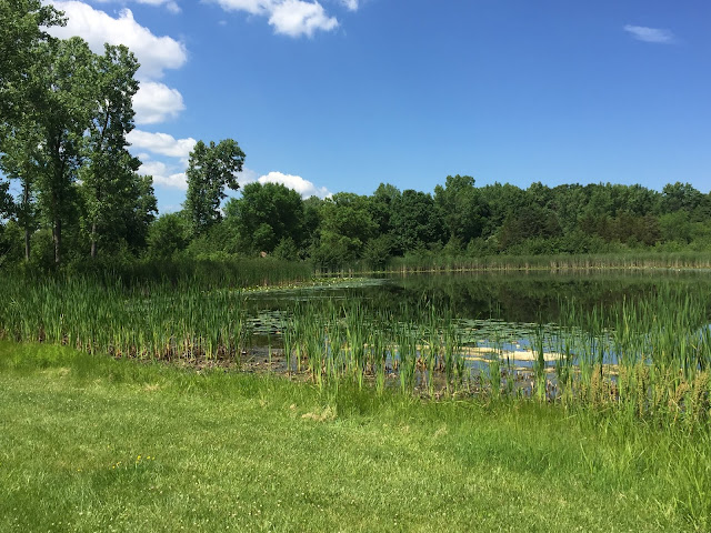 Serene lake at Half Day Forest Preserve in Vernon Hills, Illinois