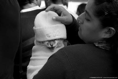 gato en bendicion para mascotas Oaxaca