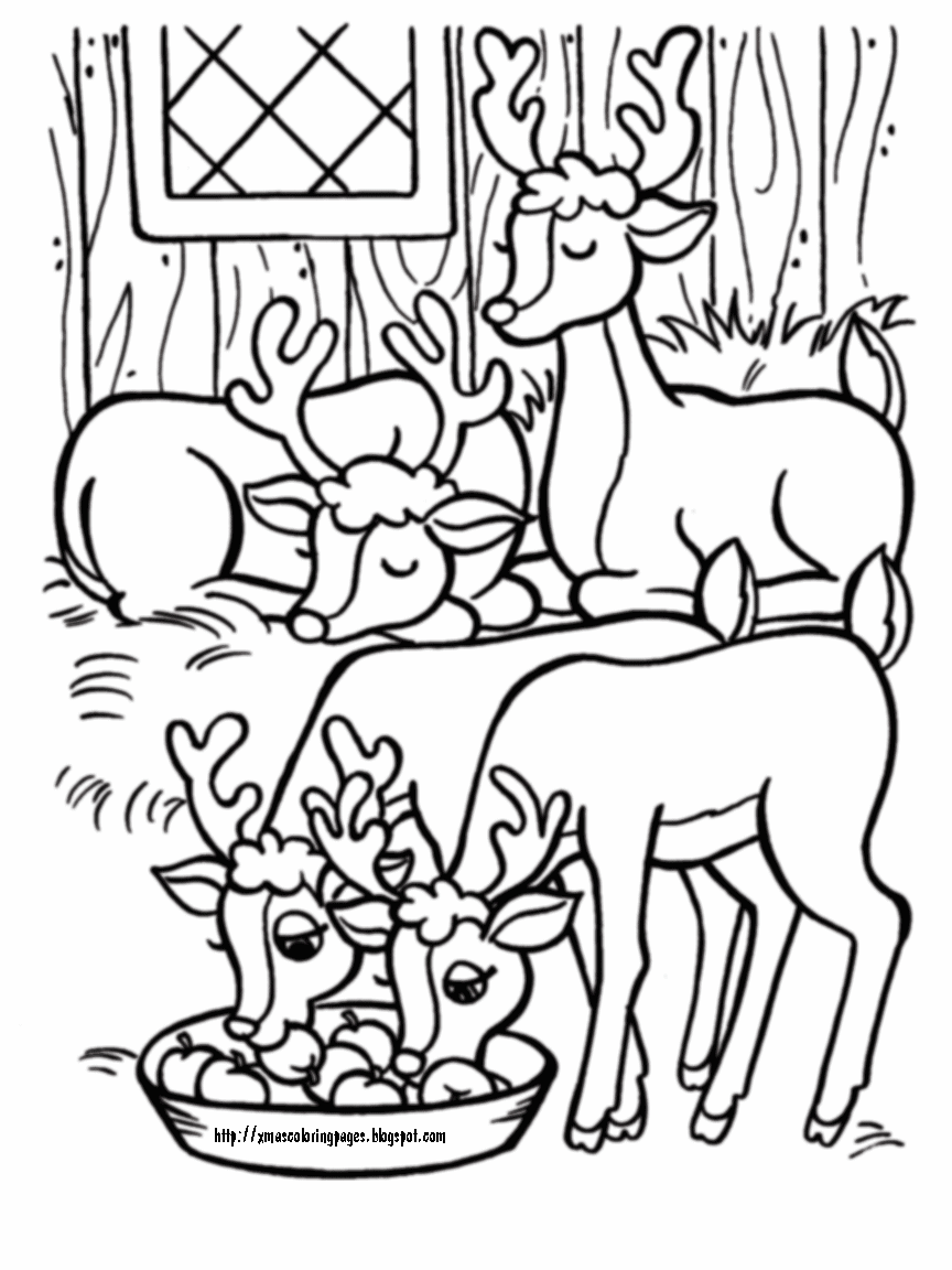 reindeer coloring page for christmas