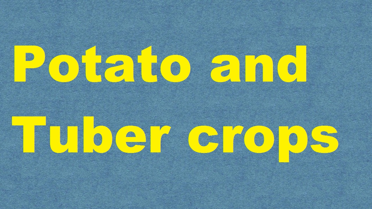 Potato and Tuber crops ICAR E course Free PDF Book Download e krishi shiksha