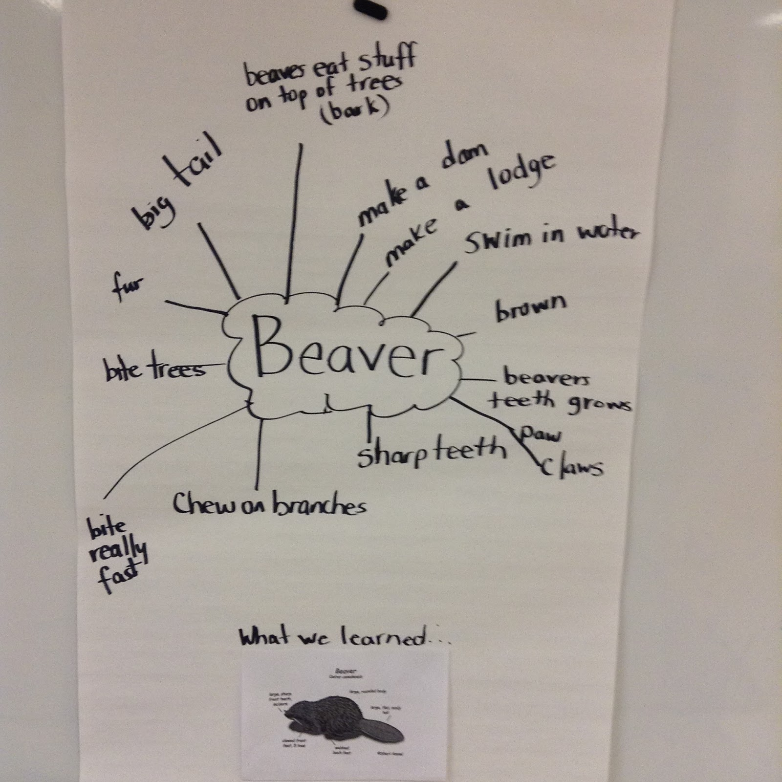 medium resolution of group discussion about beavers