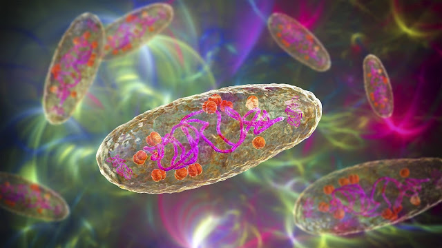 Evidence suggests bubonic plague had long-term effect on human immunity genes