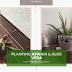 Beginner's Gardening: Grow Ajwain & Aloe Vera in Home