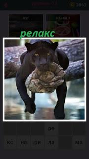 черная пантера на дереве релакс свесив лапы вниз