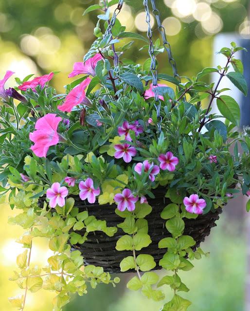 Hanging basket flowers ideas