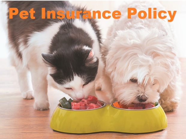 GEICO Pet Insurance Policy Quote