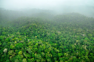 Tropikal Yağmur Ormanları Hakkında Bilgi