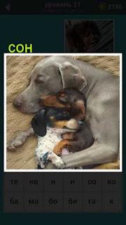 на изображении сон собаки с другими щенками ответ на 21 уровень