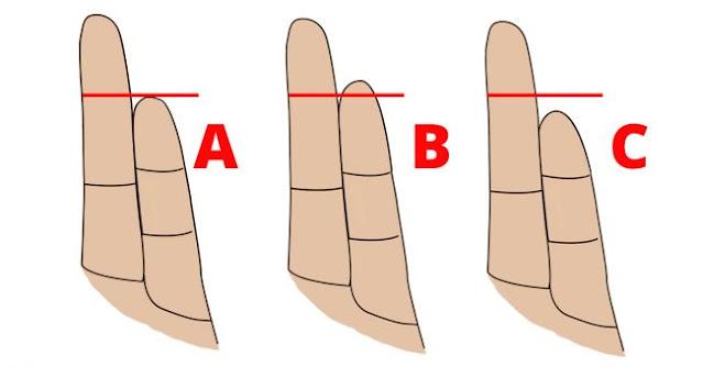 The Length Of  Finger