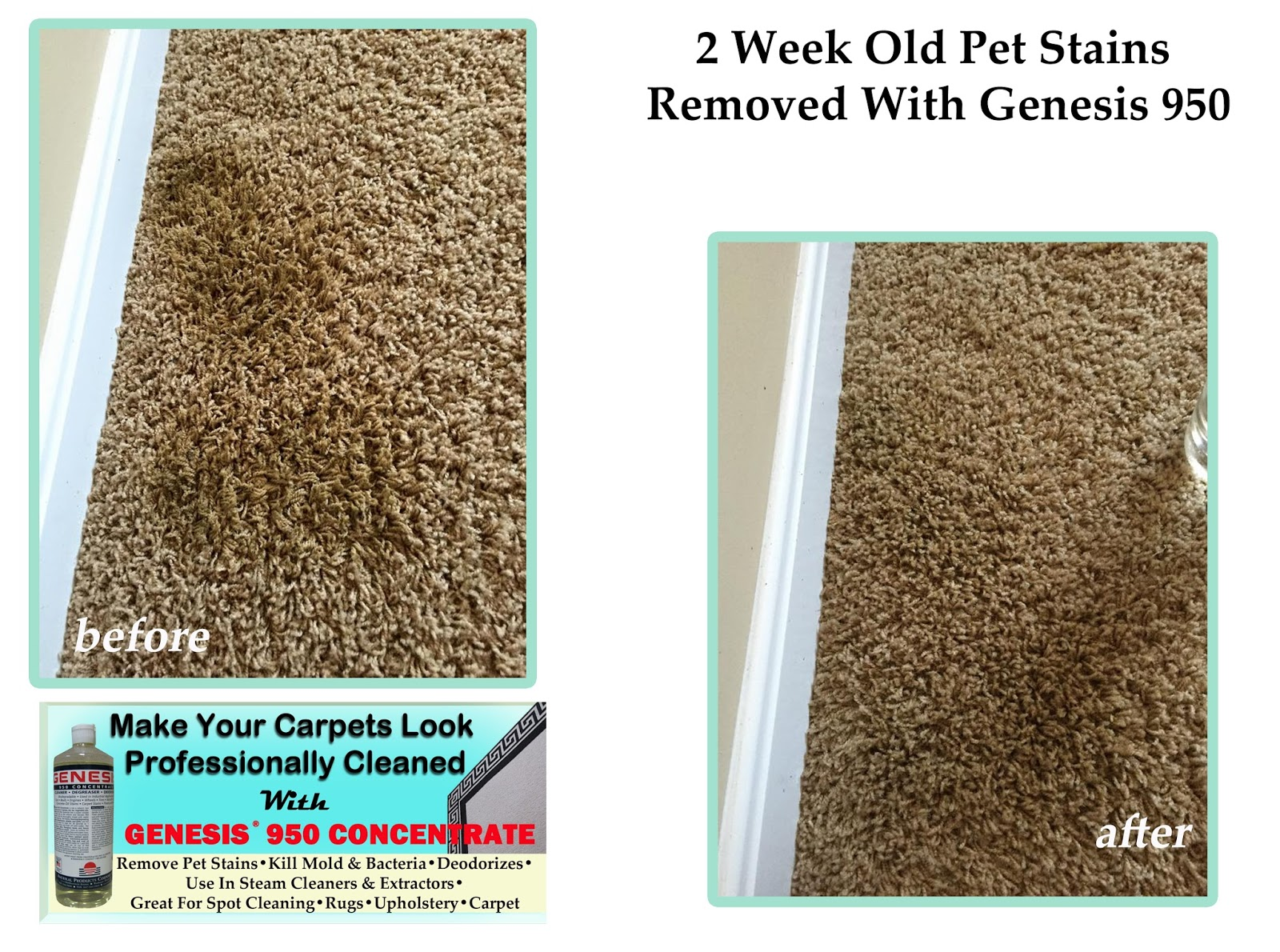 Best Carpet Cleaner And Stain Remover: Genesis 950 Before