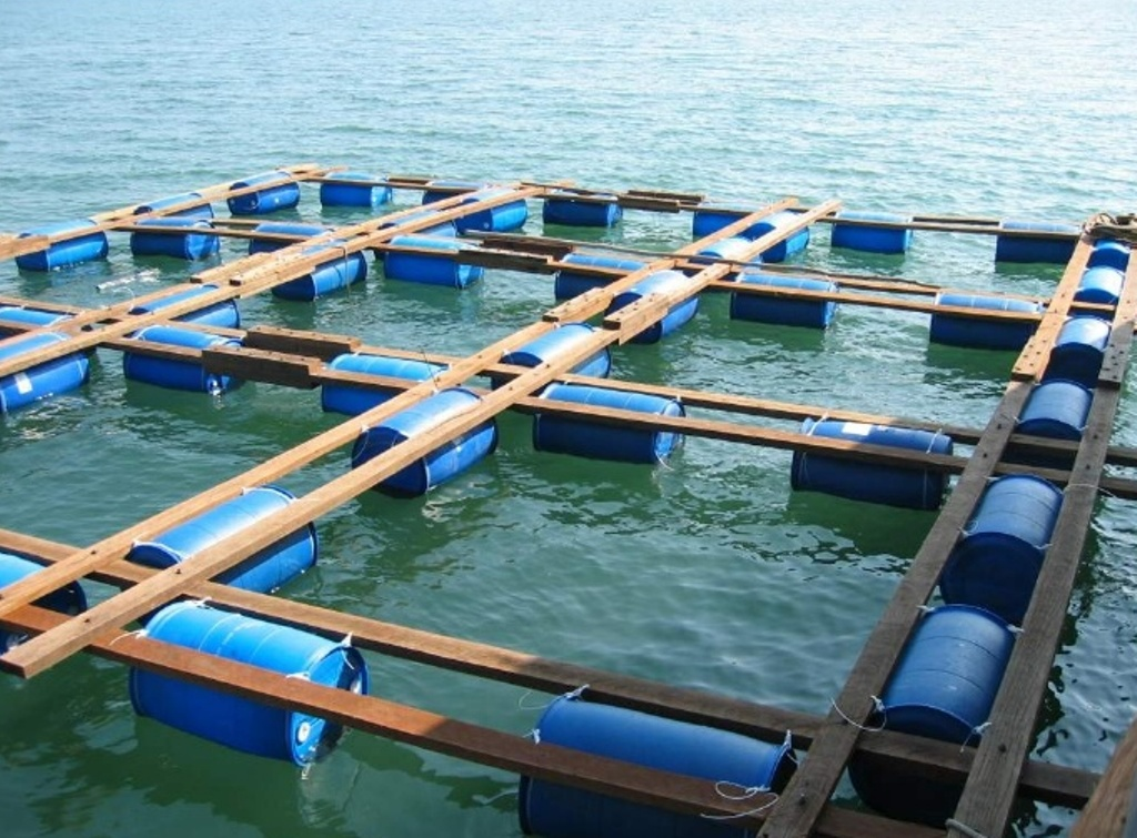 how to build a pond for fish farming