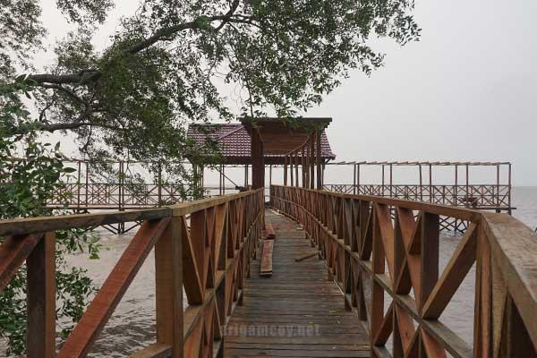 Mangrove sungai kupah, wisata mangrove kubu raya, mangrove kubu raya, mangrove jeruju