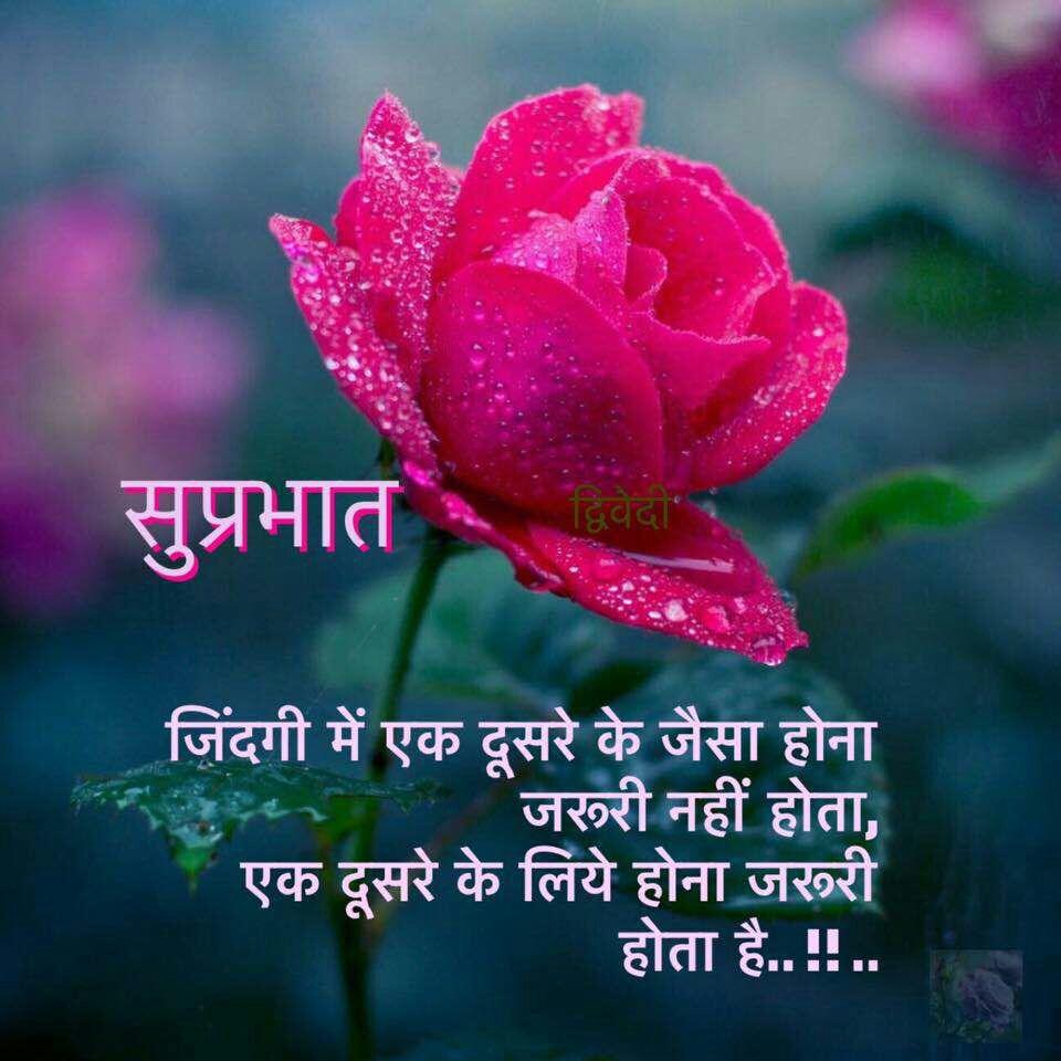 Shayri Alam Good Morning Msg Good Morning Msg 123