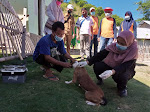 Puluhan Anjing di Bone Bolango Jalani Vaksinasi