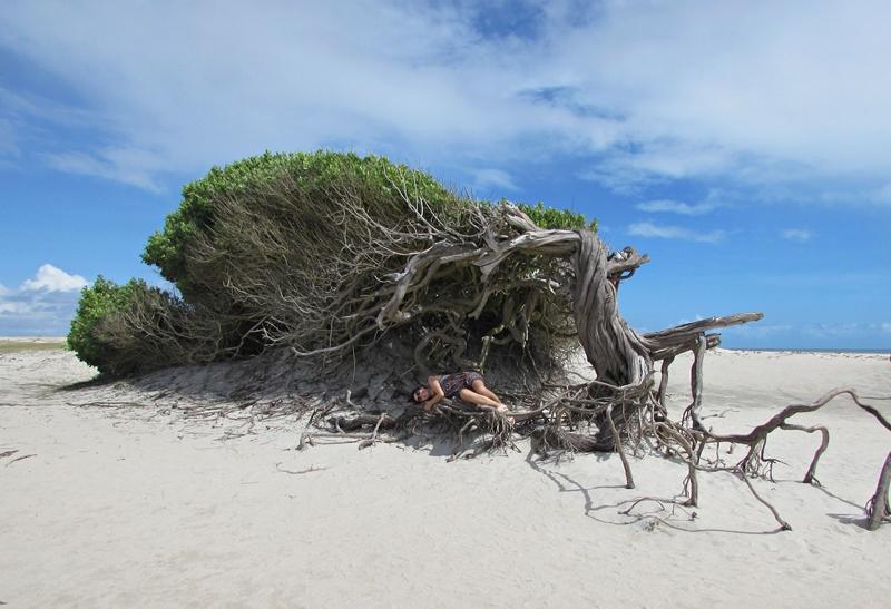 Árvore da Preguiça Jericoacoara, como chegar