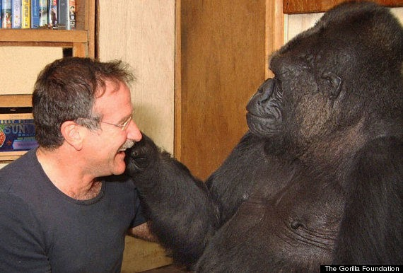 Koko gorila