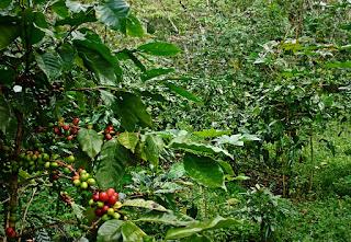 konservasi lahan dengan indigofera