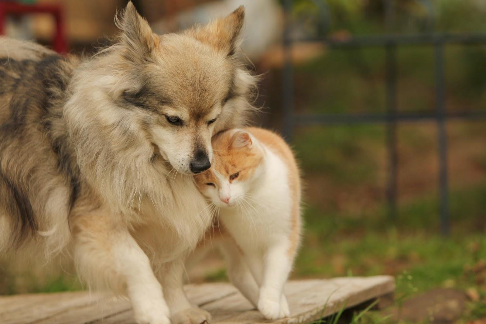 Toimittaja / valokuvaaja Nina Salonen: Kissa ja sen koira