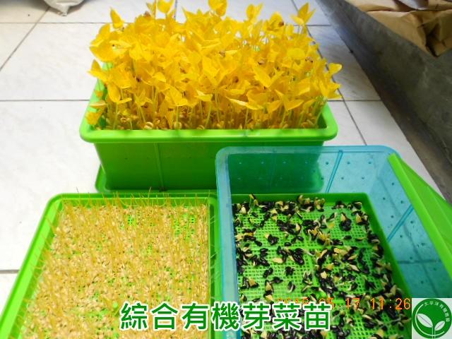 種豆芽菜容器