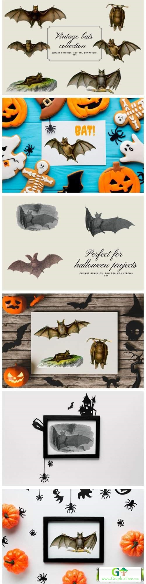 Vintage Bats Collection, Creepy Graphics [Vector] [Animals & Cartoons]